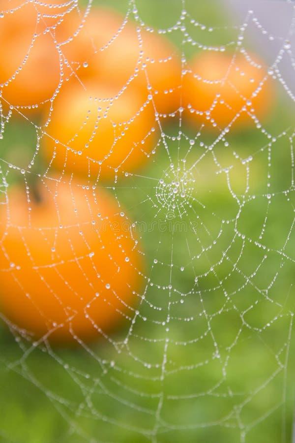 与露水和南瓜的蜘蛛网 免版税库存照片