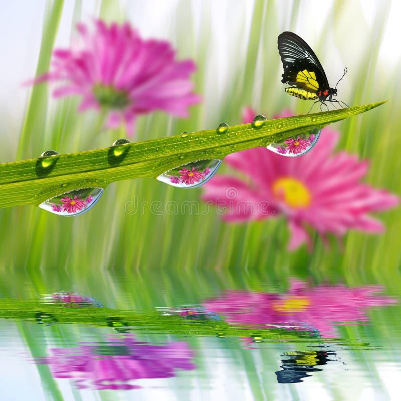 与露滴和蝴蝶特写镜头的新鲜的绿草 库存照片