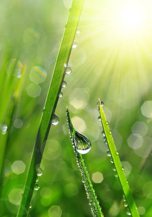 与露滴特写镜头的新鲜的绿草 库存图片