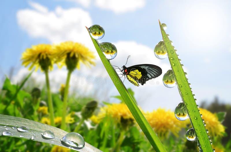 与露滴的新鲜的绿草和蝴蝶 库存照片