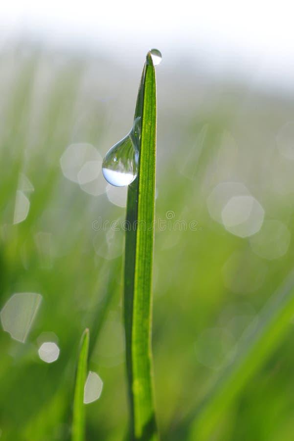 与露滴的新鲜的绿草 库存照片