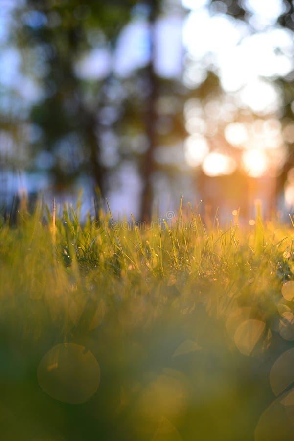 与露水的草早晨 图库摄影