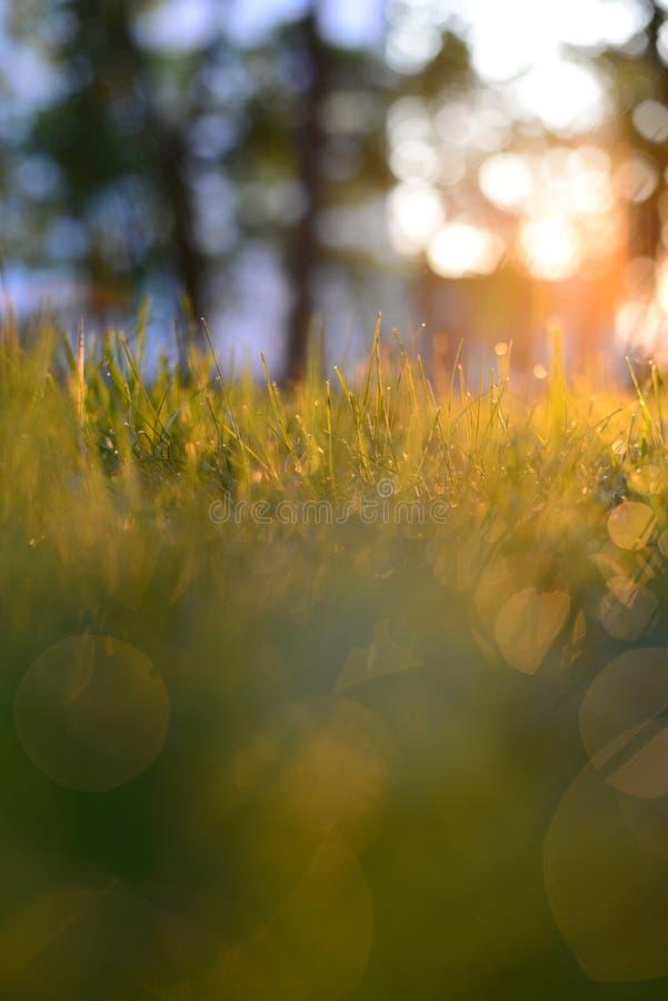 与露水的草早晨 库存照片