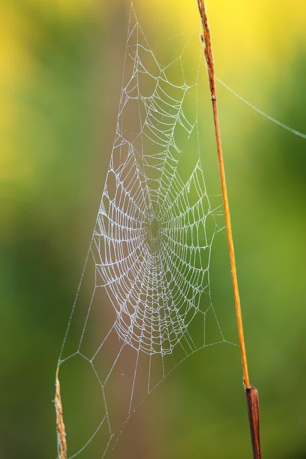 与露水的Spiderweb 免版税图库摄影