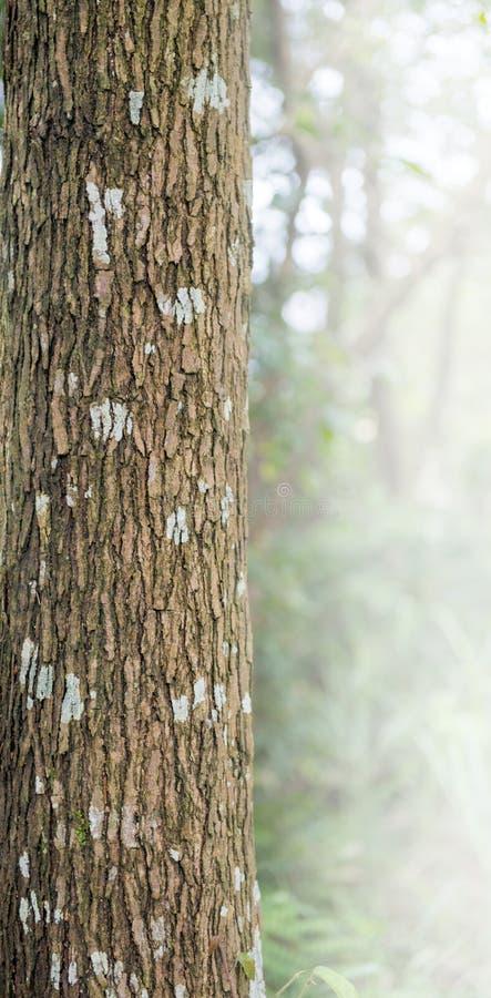 与青苔和地衣的树皮-纹理和背景 免版税库存图片