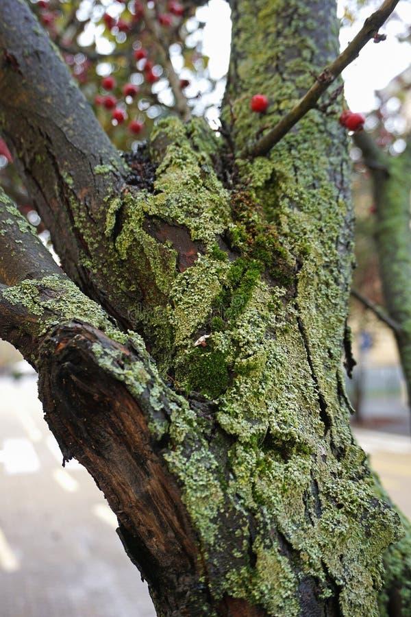与青苔和真菌的树干 免版税库存图片