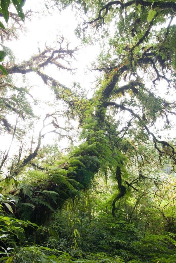 与青苔和蕨的惊人的古老结构树盖子 库存照片