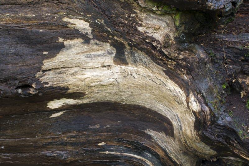 与青苔的下落的树细节 免版税库存图片