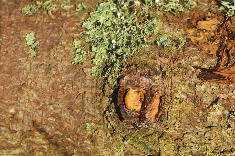 与青苔的杉木吠声 抽象背景设计 库存图片