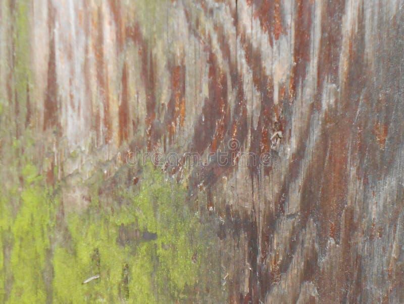 与青苔的杉树树干 免版税库存图片