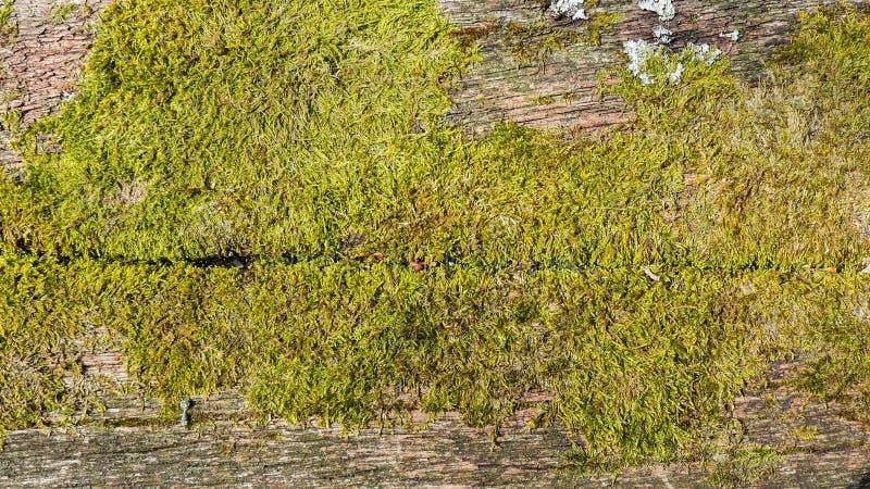 与青苔的老木头 图库摄影