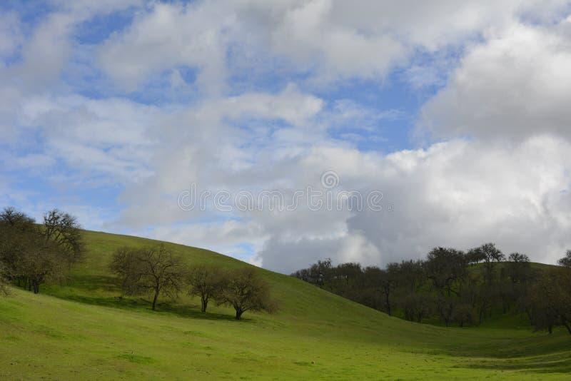 与青苔的滚动的青山盖了橡树 库存图片