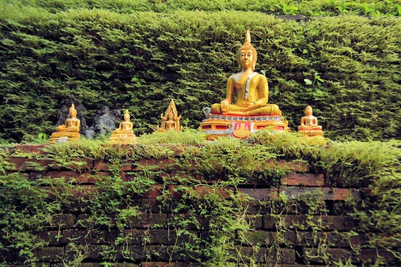 与青苔盖的墙壁的金黄菩萨雕象 库存图片