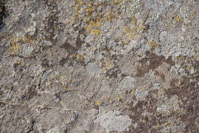 与青苔,特写镜头的灰色石纹理背景 免版税库存照片