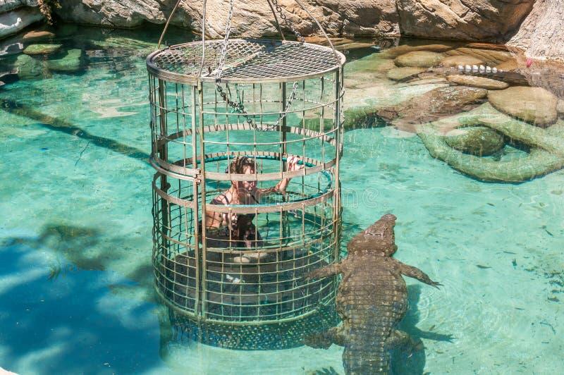 与非洲鳄鱼的笼子潜水 库存图片