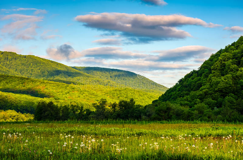 与领域、森林和山土坎的乡下风景 免版税库存图片