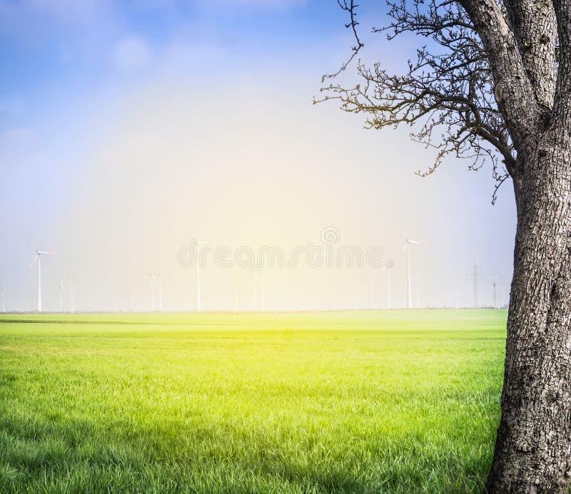 与领域和大树的春天风景在风轮机背景 免版税库存图片