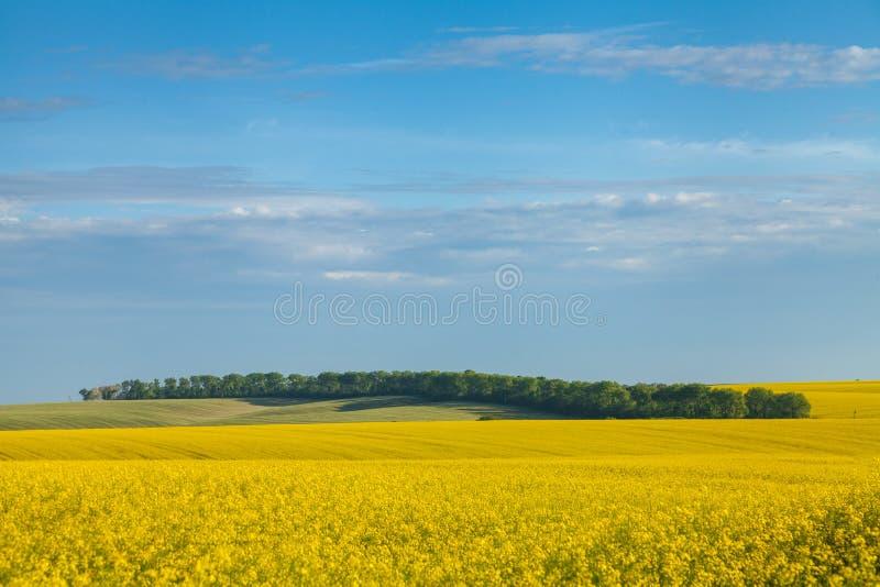 与领域的晴朗的风景 免版税库存照片