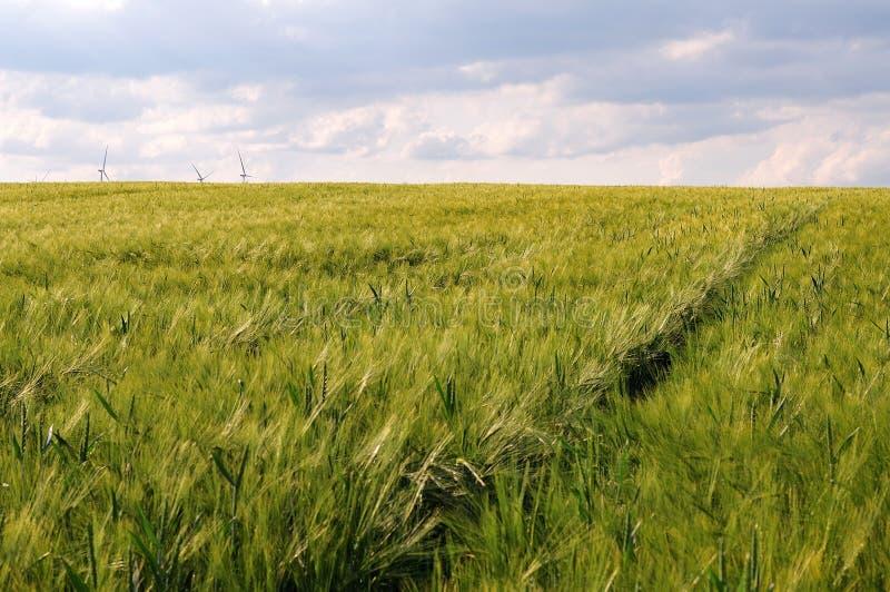 与风轮机的大麦领域在背景中 库存图片