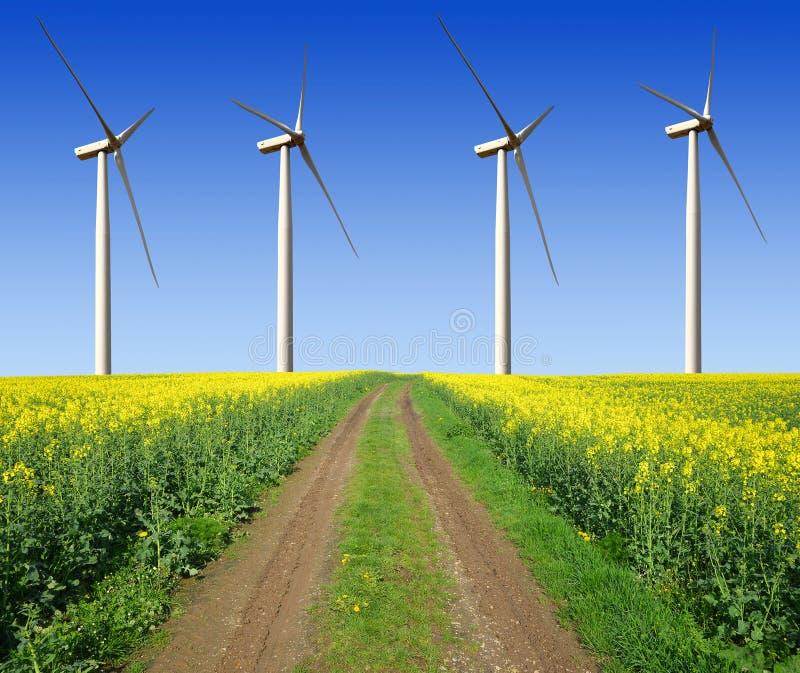 与风轮机的油菜籽领域 库存照片