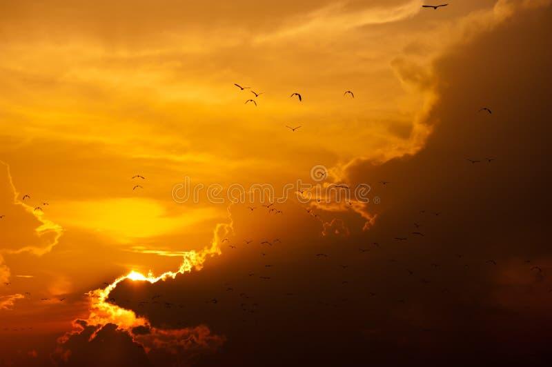 与飞行的鸟,金黄光和云彩的日落 库存图片