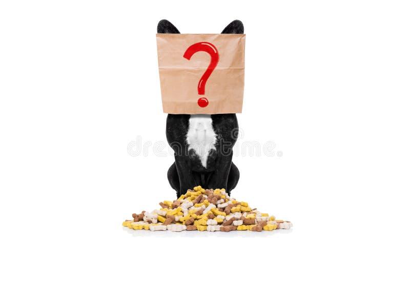 与食物山的饥饿的狗 库存图片