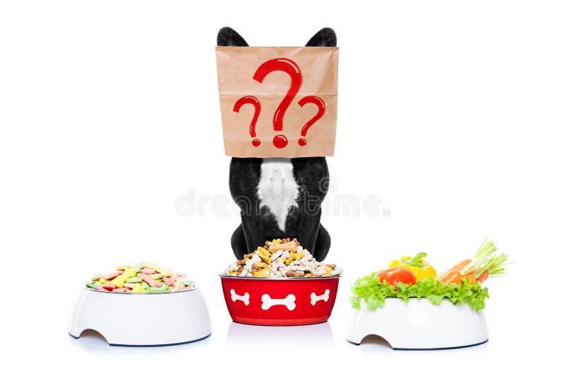 与食物碗的饥饿的狗 库存图片