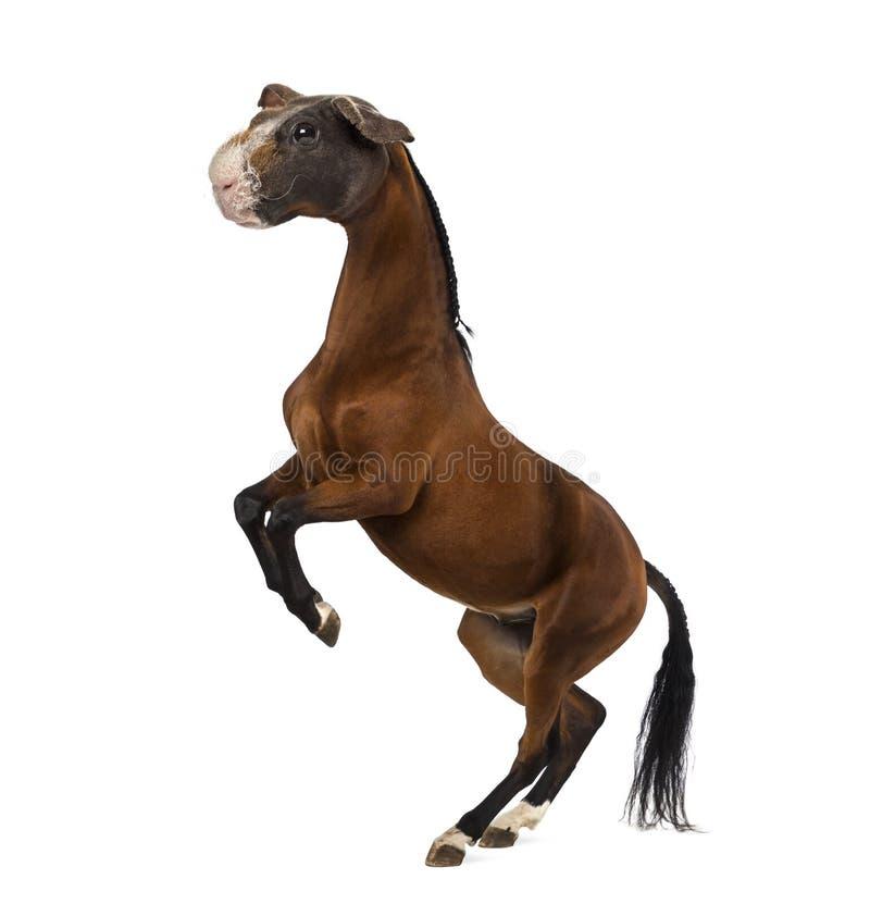 与马和抚养的试验品的头的虚构物  库存图片