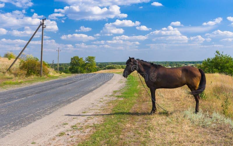 与马的乌克兰夏天风景在路旁 库存图片