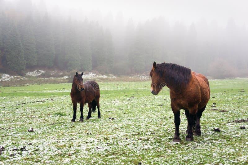 与马的冬天风景 免版税库存图片