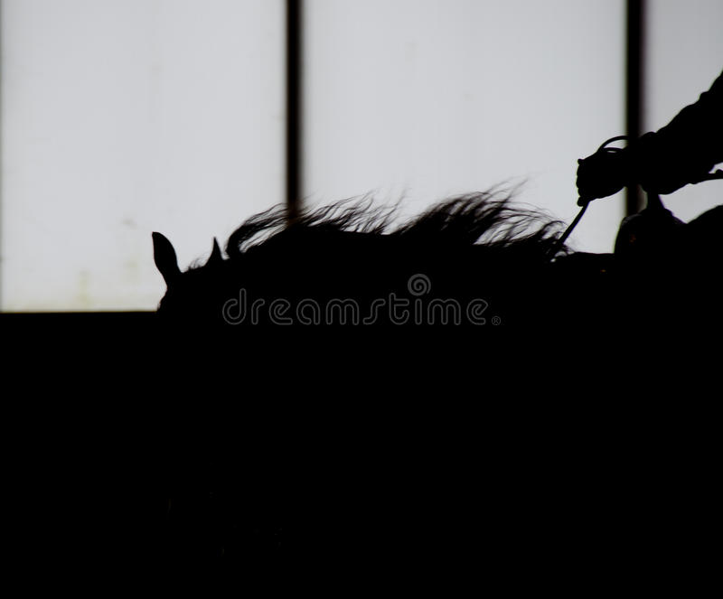 与马鞍的黑马外形 库存图片