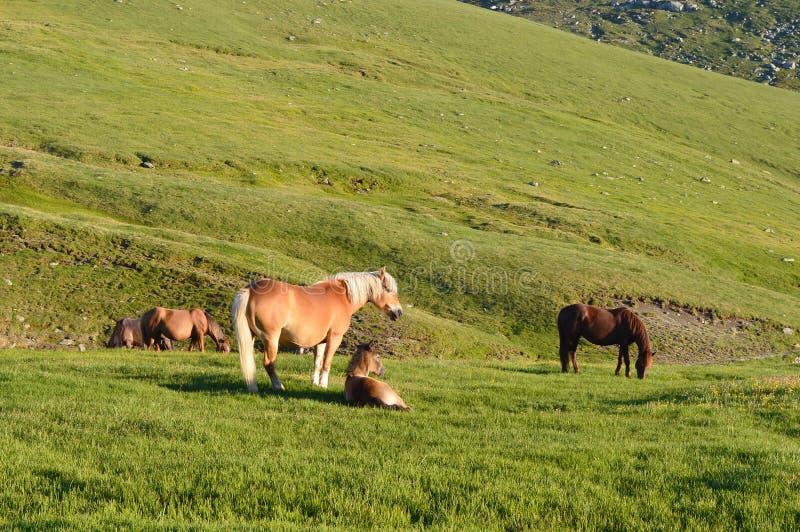 与驹的美丽的母马在牧场地 免版税库存图片