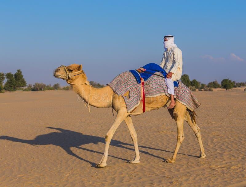 与骆驼的沙漠风景 免版税图库摄影