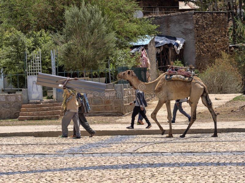 与骆驼,阿克苏姆,埃塞俄比亚的街道场面 库存照片