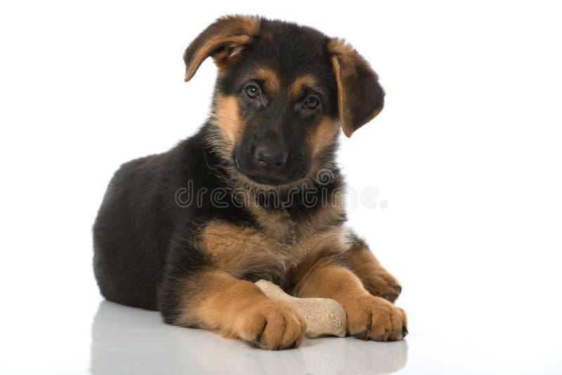 与骨头的小狗 免版税库存照片