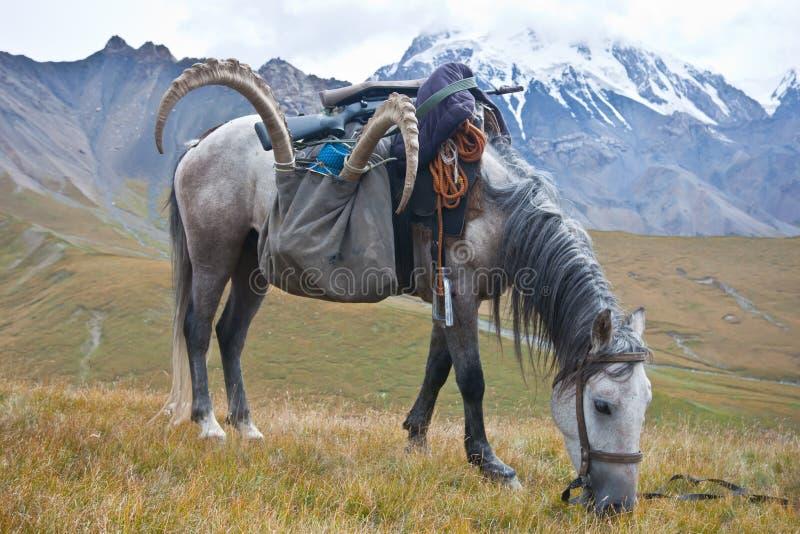 与高地山羊战利品的马在寻找在天山登上以后 免版税库存图片