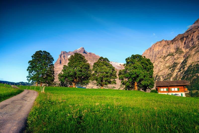 与高多雪的山的令人惊讶的春天绿色领域,格林德瓦,瑞士 免版税库存照片