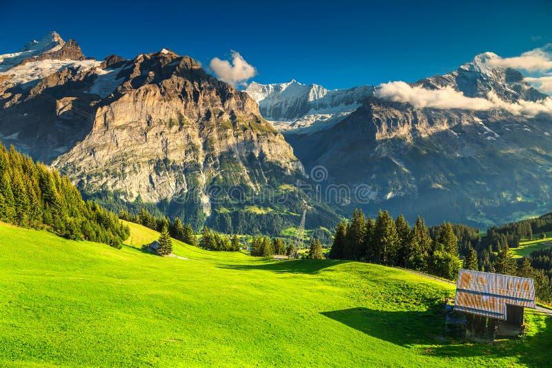 与高多雪的山的惊人的绿色领域,格林德瓦,瑞士 库存图片