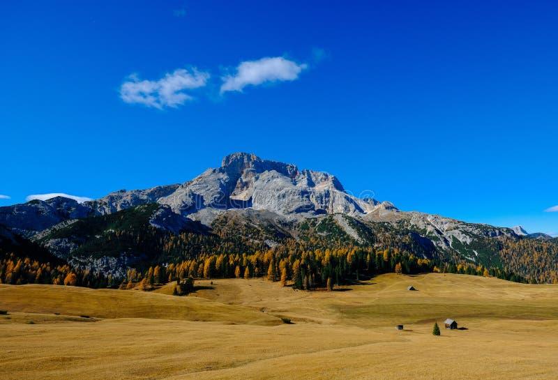 与高大的树木的干草领域和与天空蔚蓝的一座山在背景中 库存图片