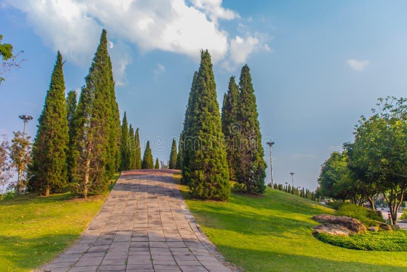 与高杉树的美好的小小山风景在绿草领域和蓝天白色云彩背景 中华的桧属 免版税库存图片