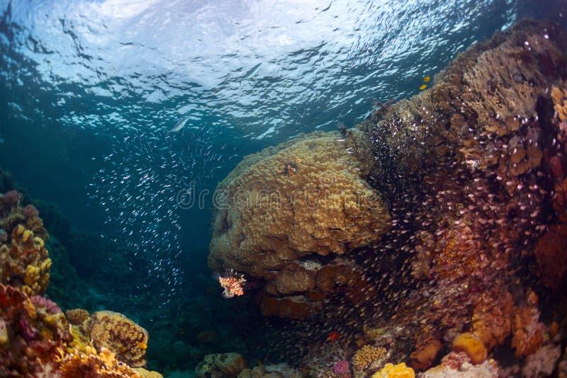 与鱼的礁石 免版税图库摄影