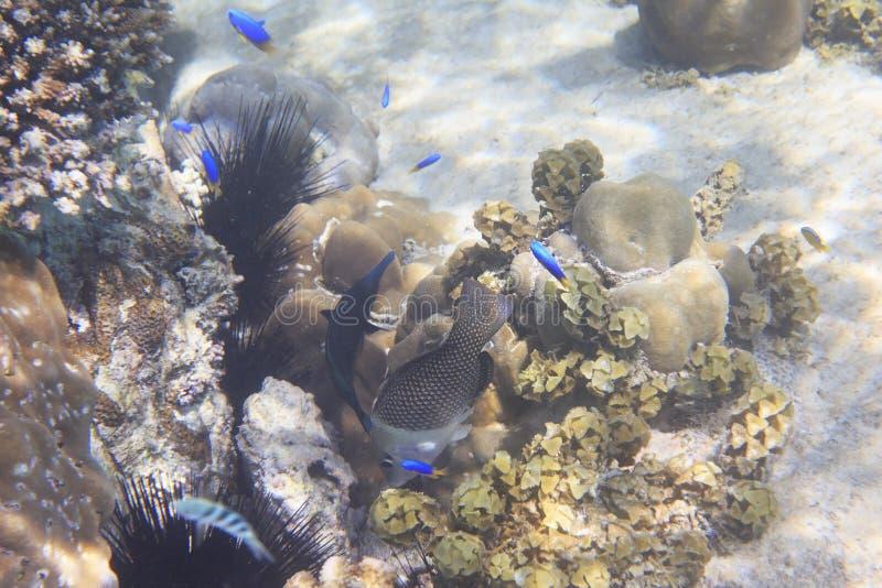 与鱼的美丽的珊瑚礁 近印度洋 库存图片