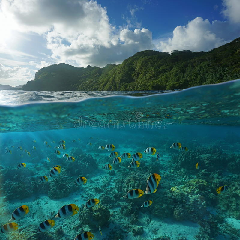 与鱼水下的海洋学校的绿色海岸  图库摄影