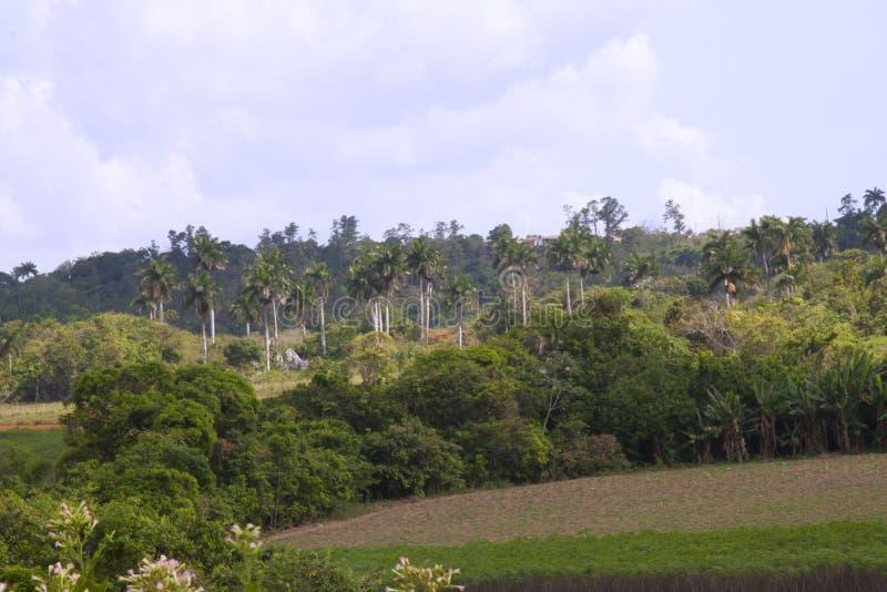 与鲜亮的棕榈的风景 免版税库存图片