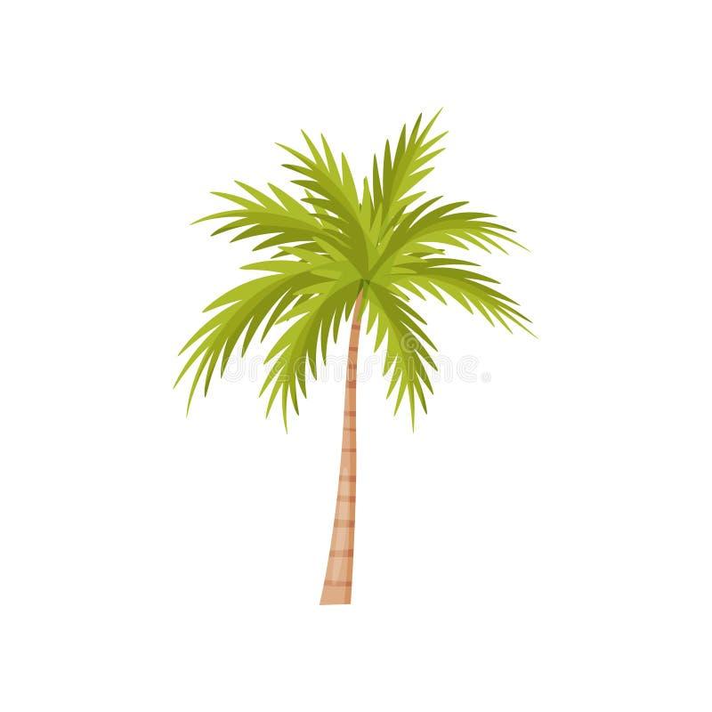 与鲜绿色的叶子的棕榈树 自然风景元素 狂放的巴厘岛密林植物  平的传染媒介设计 向量例证