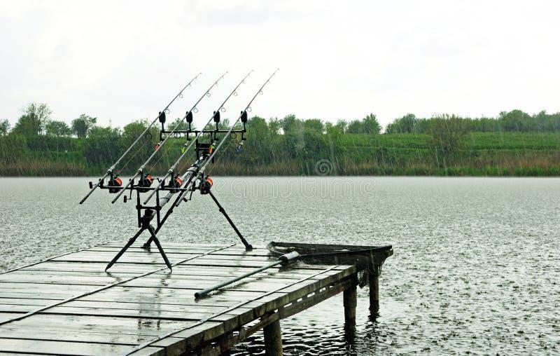 与鲤鱼标尺的鲤鱼渔在标尺荚在雨中 库存图片