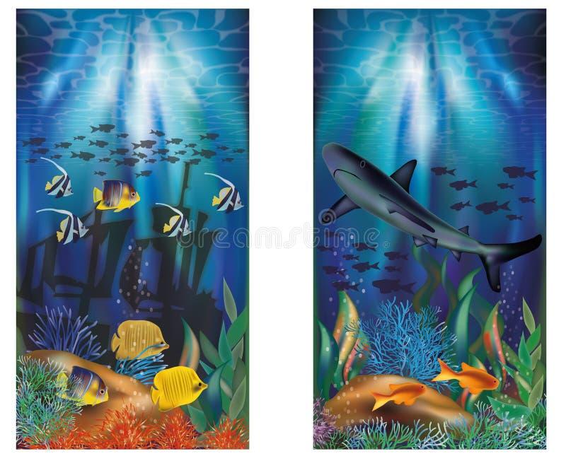 与鲨鱼的水下的热带横幅 皇族释放例证
