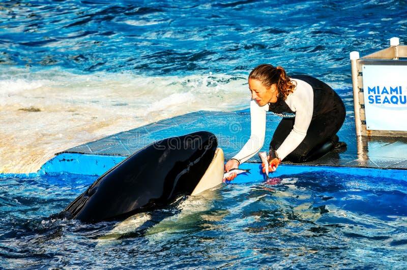 与鲸鱼的Seaquarim 库存照片