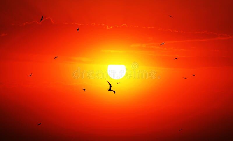 与鸟和橙红云彩的太阳上升 免版税库存照片