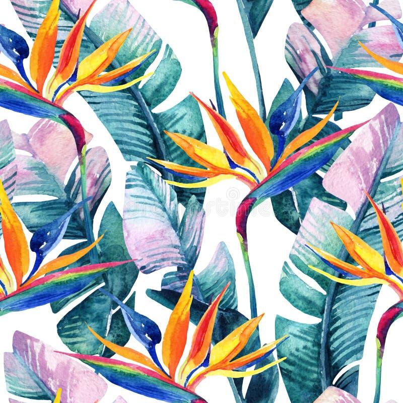 与鸟天堂花的水彩热带无缝的样式 库存例证
